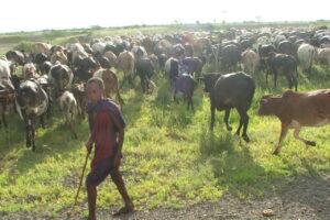 África 2007