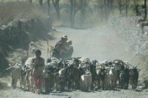 CACHI y Valles 2013