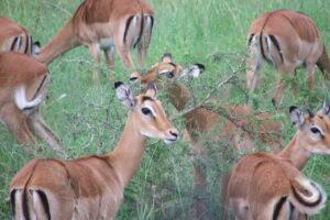 Serengueti 2007